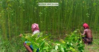ঝিনাইদহে পুকুর ডোবায় নেই পানি, পাট জাগ দিতে মহাবিপাকে পাটচাষীরা