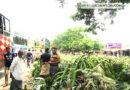 ঝিনাইদহ-কুষ্টিয়া মহাসড়কে কলার বাজার, ভোগান্তি চরমে প্রায়ই ঘটছে দুর্ঘটনা