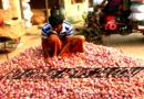 ঝিনাইদহের হাটবাজারে এখন নতুন পিয়াজে ভরপুর