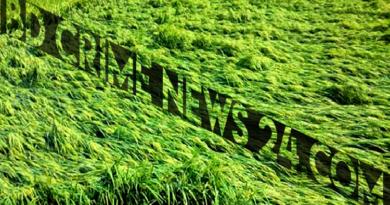 ঝিনাইদহ কালবৈশাখী ঝড়ে ইরি-বোরো ধানের ব্যাপক ক্ষতি